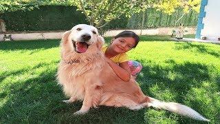 Masal'ın Akıllı Köpeği Gold Eğitim de! Smart Dog training , Family Fun KİDS Video