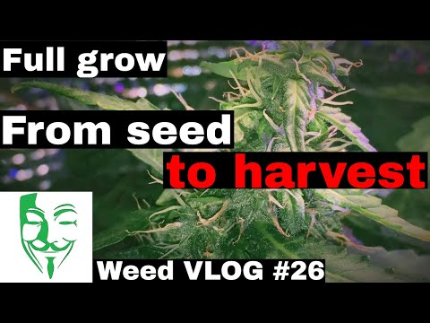 Autoflower CFL and LED Micro grow from seed to harvest stage FULL grow guide