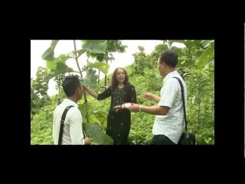 Teak Plantation in Myanmar