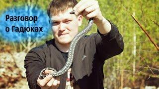 Животные ОбзорЫ  раздув за змей от Володи