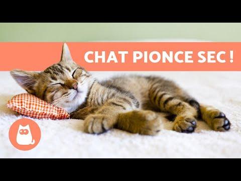 Combien De Temps Dort Un Chat ? 🐱 - Chaton, Adulte Et Âgé
