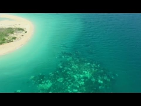 Great Barrier Reef hit by coral bleaching