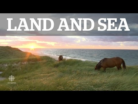 Land & Sea: Sable Island