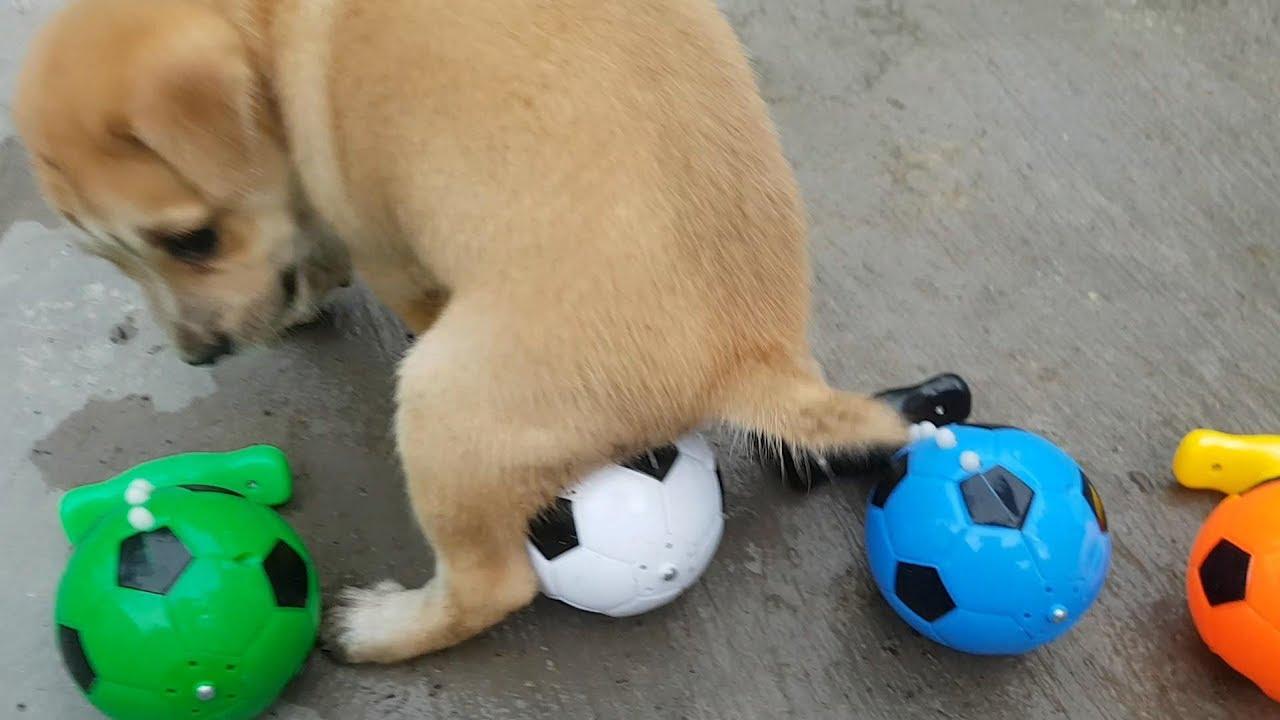 Chó Con Chơi Với Bóng Quay ❤ ChiChi ToysReview TV ❤ Ball Kids Baby Doll Play