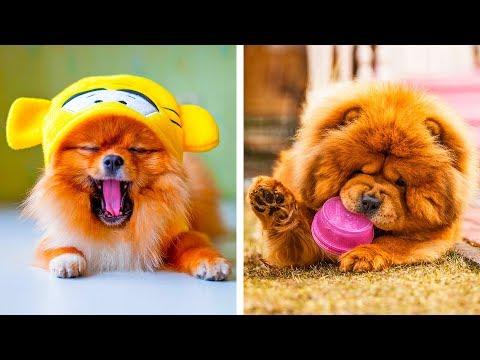 8 Cute Dog Breeds That'll Make You Go Awww