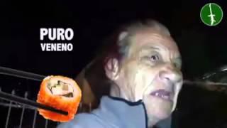 Gilberton Sushi Sushingada madre  Puro Veneno