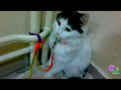 Вопрос: Можно ли вызвать службу спасения что бы найти кошку дома?