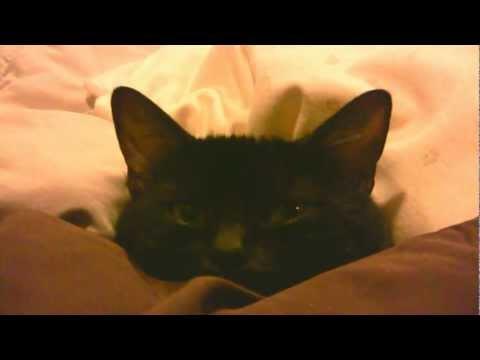 あたたまる猫 3  The Cat King is wrapped in a blanket 3