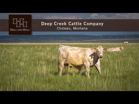 Deep Creek Cattle Company - Choteau, Montana