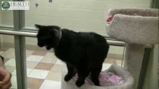 Pet Clicker Training At The Kent County Animal Shelter