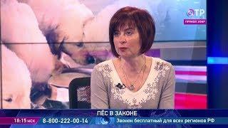 Почему собака бывает кусачей - рассказывает кинолог Наталья Спиридонова