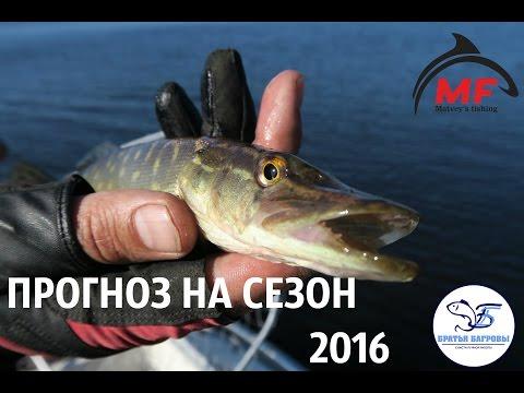 Прогноз клева на летний сезон 2016))