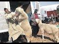 كواليس العيد ,شخص. يتصارع مع خروف. مواقف مضحكة. ,اضحك مع خروف العيد, 2019