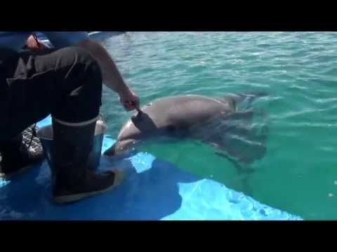 Animal Spotlight Tour with Dolphins at Seaworld San Diego - HDThrillSeeker