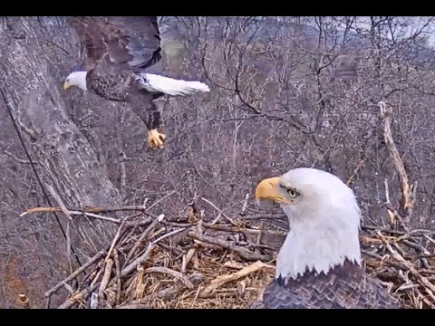Eaglet hatches in Hanover, PA