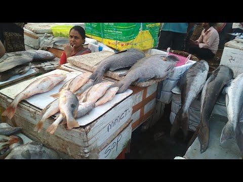 Sassoon Dock | Largest Fish Market In The Mumbai | India