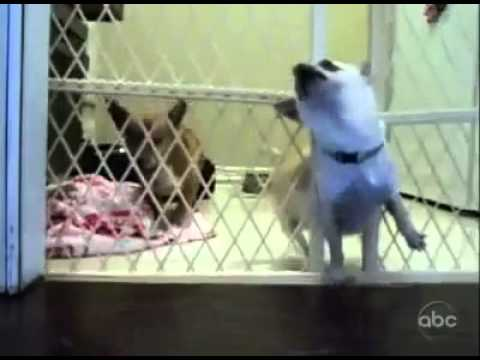 Prison Break Dog Edition Funnydog Tv