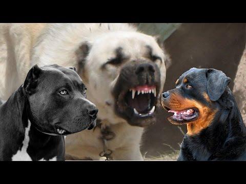 TOP 10 - I cani più forti del mondo