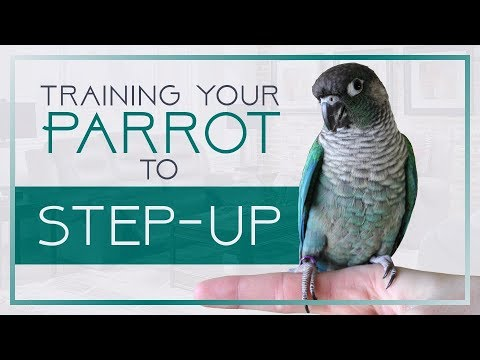 Training Your Parrot to Step-Up