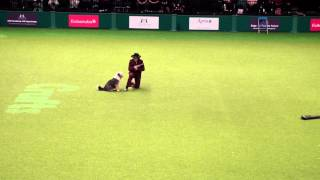 Crufts 2012 Heather Smith Pour L'ecosse