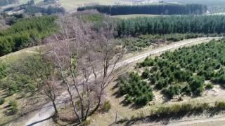 Bäume (Point of Interest, Dji Phantom 4 Pro Plus