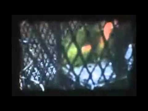 "Via Audio - ""Olga"" Video (PopMatters Premiere)"