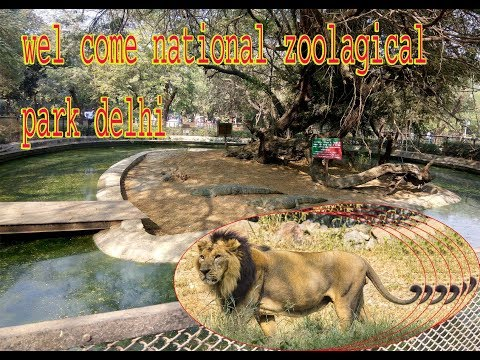 Delhi zoo chidiya ghar national zoological Park best zoo in delhi