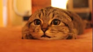 НЕ РЖИ кот смотрит ужастики