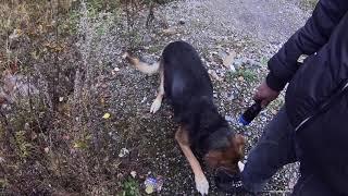 Напала злая собака! 🔴Б.О. Изумруд. (LIVE Сталк#81)🔴