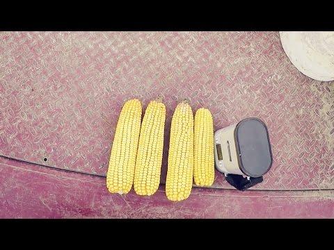 Current Corn Moisture
