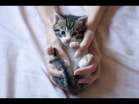Промахи в воспитании собак и кошек: самые частые ошибки