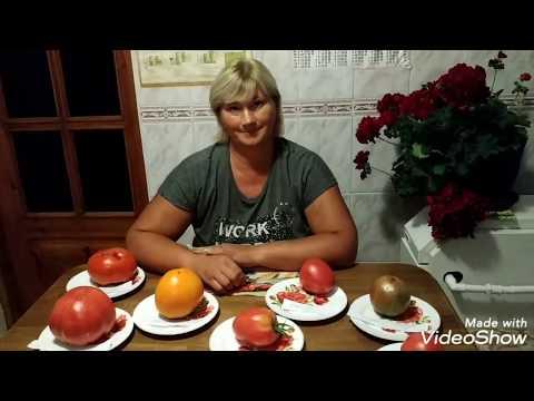 Дегустация томатов Божественный ранний,Хоумстед,Фиделио,Райское наслаждение,Оранжевая клубничка.
