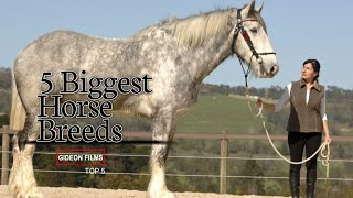 "5 Biggest Horse Breeds | World""s Biggest Horse 
