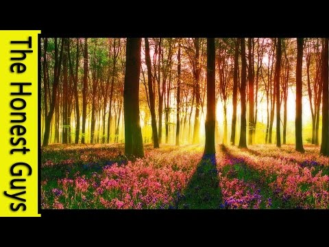 LOTR GUIDED MEDITATION - THE GREEN ELVEN WOOD
