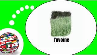 Французского видео урок = зерновых
