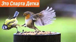 Подборка приколов с птицами Умные птицы Смешные птицы ПРИКОЛЫ 2021