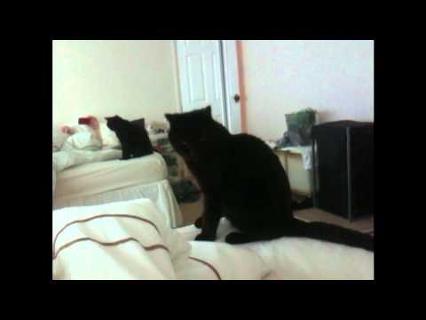 Funniest Cat Video EVER!! SO CUTE SO FUNNY!! STUPID CAT