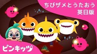ちびザメの ぼうけん | サメのかぞく | ちびザメとうたおう英日版 | どうぶつのうた | ピンキッツ童謡