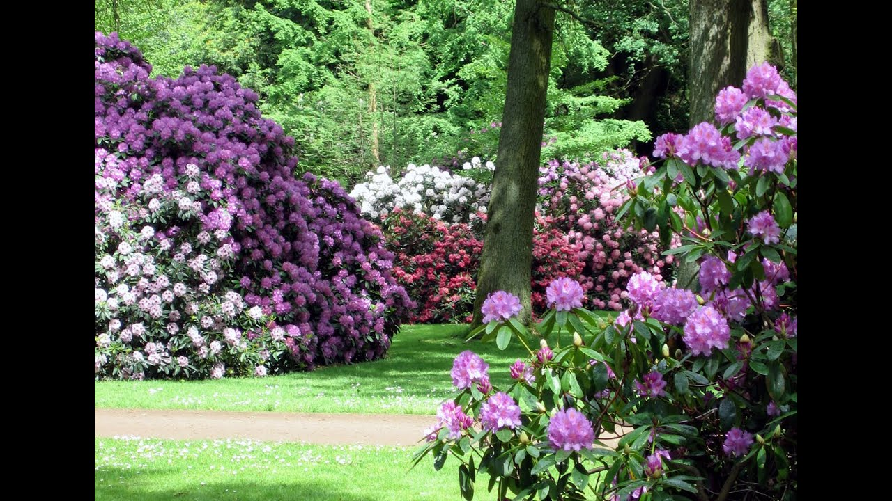 amazing rhododendron flower park at beemer germany youtube. Black Bedroom Furniture Sets. Home Design Ideas