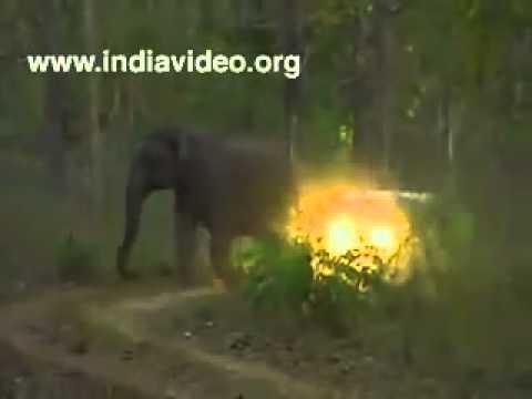 ELEPHANT ATTACK IN KERALA'S TEMPLE - YouTube  Kerala Elephant Attack Youtube