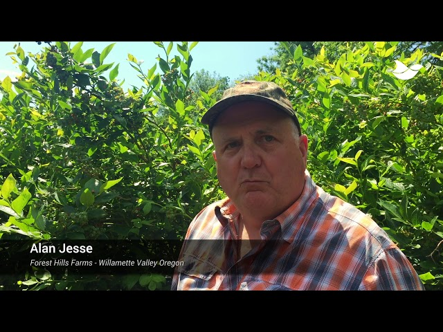 Testimonial: Autonomic laser effectively disperses starlings and keeps crops safe
