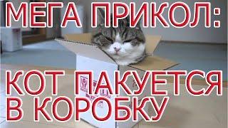 Приколы с кошками.  Кот настойчиво лезет в коробку