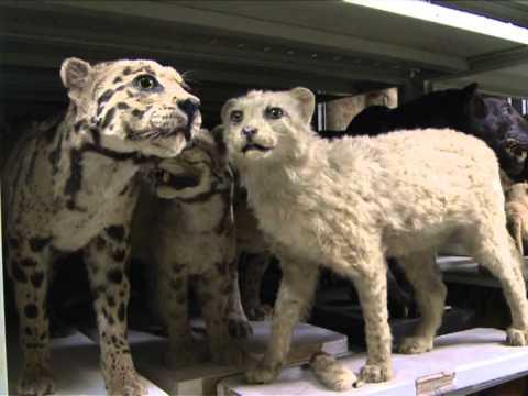Visits to Paris museum of evolution hit 10 million