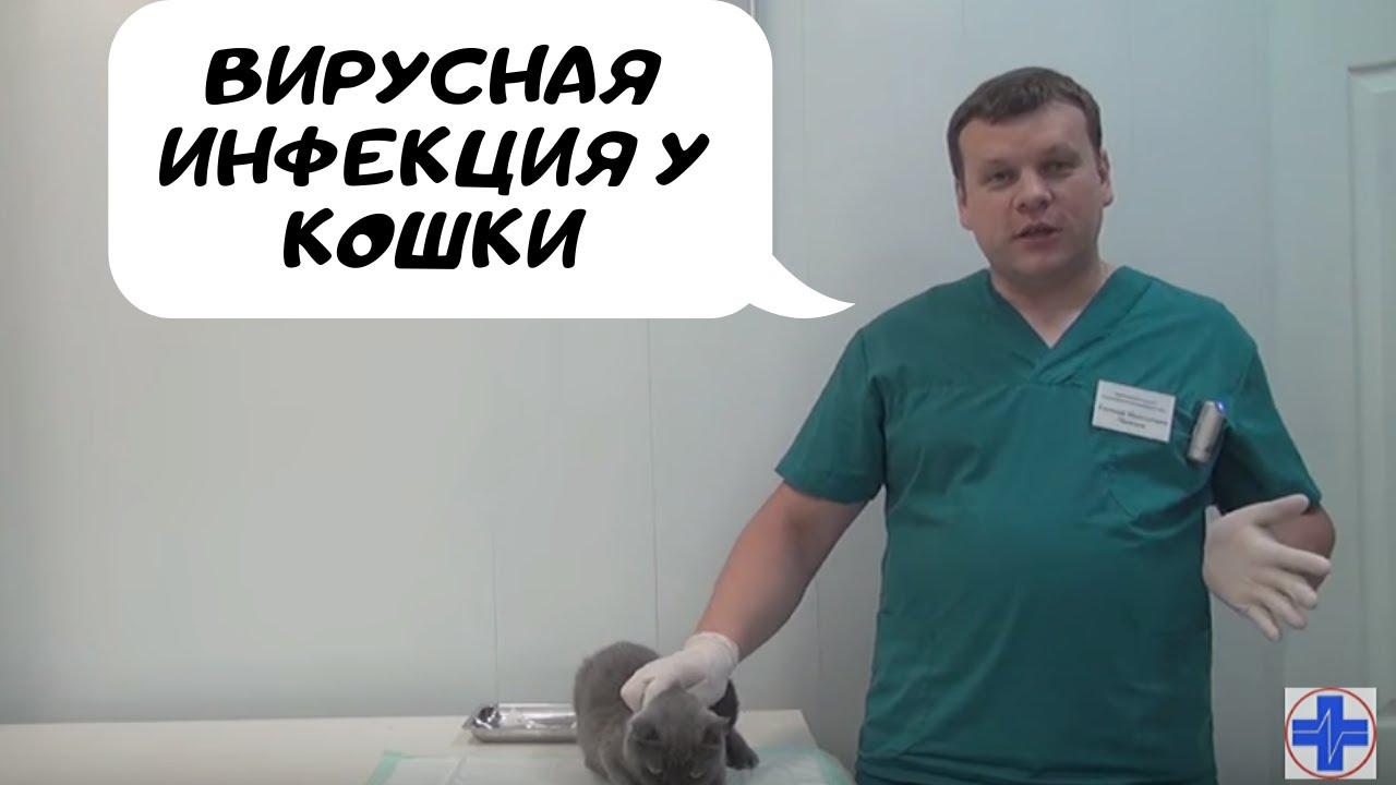 что такое вирусная инфекция у кошек