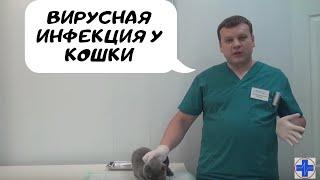 Вирусная инфекция у кошки