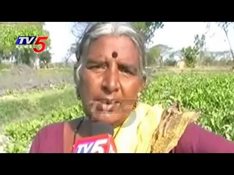 Vegetable Farmers In Trouble Due To Water Crisis | Nizamabad | Annapurna | TV5 News