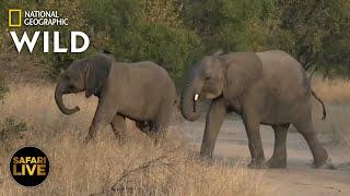 Safari Live - Day 366 Nat Geo Wild
