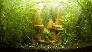 Аквариумные растения 2