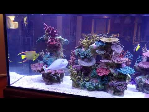 Ray's 240-gallon Marine Display