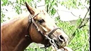 О чистокровной арабской породе лошадей
